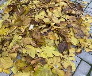 autumn, yellow, and leaf image