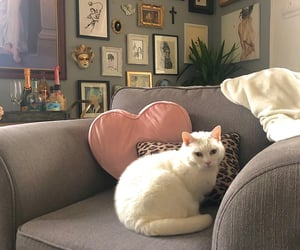 cat, decoration, and home image