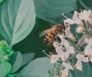 aesthetic, green, and bee image