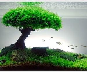 fishtank, aquarium fish, and aquascaping image