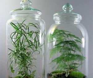 terrariums image