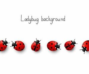 illustrations, nature, and ladybugs image
