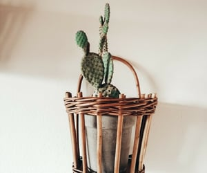 cactus, home, and home ideas image
