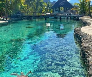 clear water, Island, and coral image