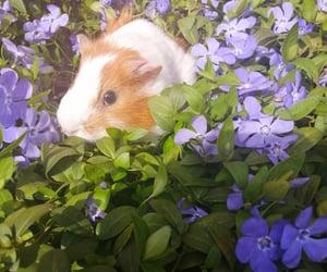 flowers, pet, and purple image