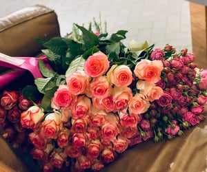 pink, lovely, and roses image