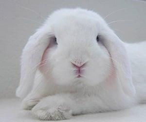 animal, bunny, and white image