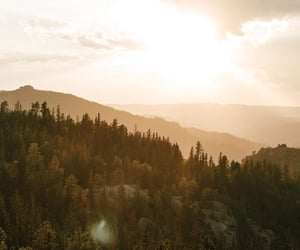 forest, relax, and earth tones image