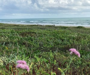 beach, flowers, and pretty image