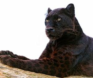 aesthetic, animal, and beauty image