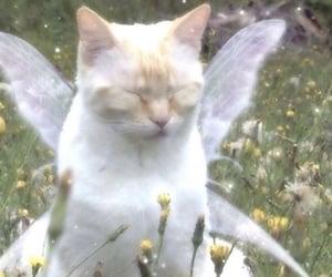 cat, fairy, and cottagecore image