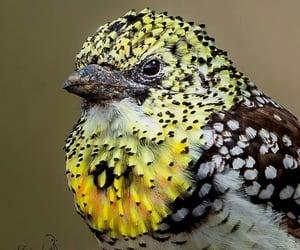 bird and usambiro barbet image