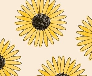 sunflower, background, and rose image