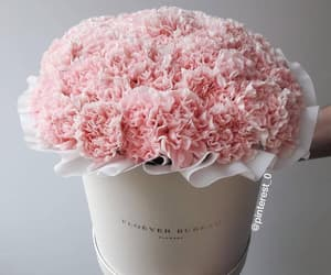 flowers, baby pink, and beautiful image