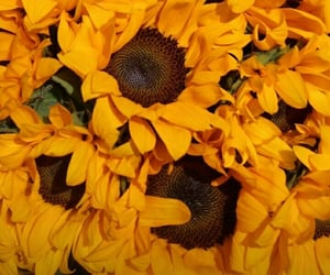flowers, summer, and sunflower image