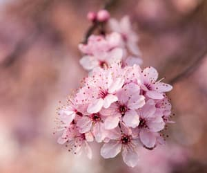 art, artwork, and cherry blossom image