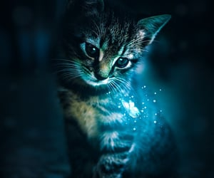 animals, blue light, and cats image