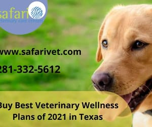 vet wellness plans texas image