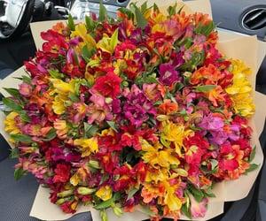 flores, primavera, and ramo image