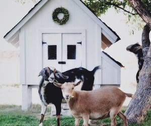 goats, rural, and small town image