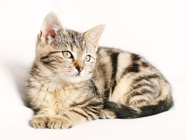 article and cat image