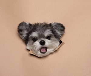 adorable, dog, and cute image