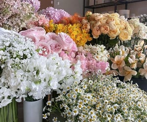 colors, roses, and flores image
