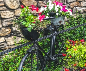 bicycle, life, and nature image