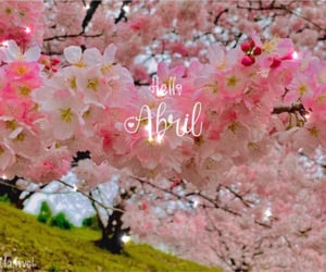 aesthetic, cherry blossom, and photography image