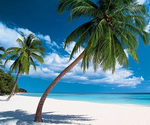 beaches, oasis, and tropics image