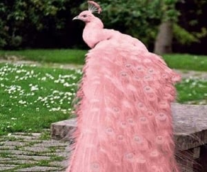 peacock, pink, and animals image