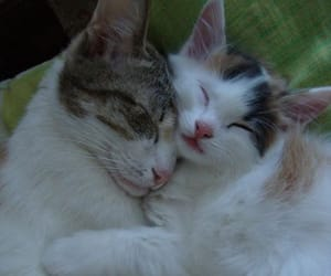 aesthetic, cats, and cats in love image