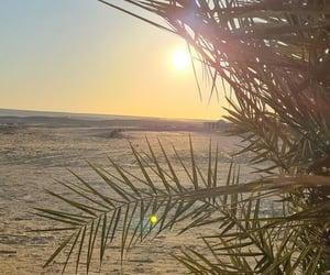 desert, egypt, and green image