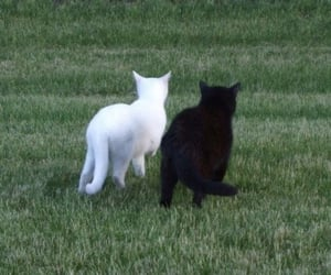 cat, aesthetic, and animals image