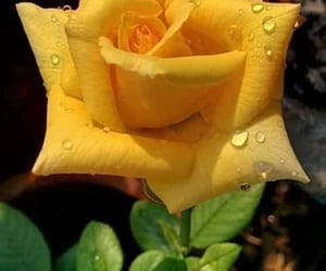 yellow flowers, flowers, and beautiful flowers image