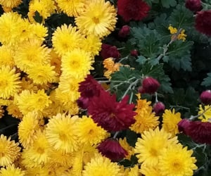 flowers, yellow, and beautiful flowers image