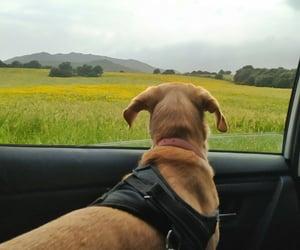 dog, italy, and travel image