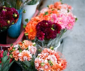 flowers, pretty, and nature image