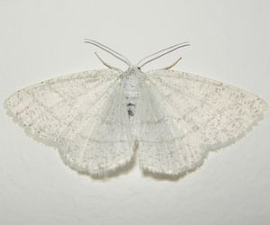 white, butterfly, and moth image