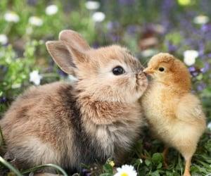 animal, bunny, and easter image