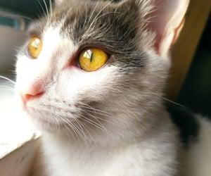 Gatos, soft, and olhos amarelos image