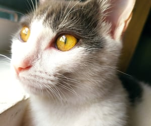 Gatos, soft, and felinos image