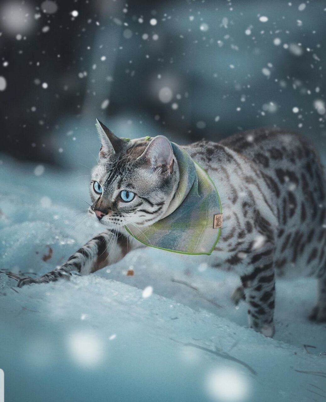 animals, snow, and cats image
