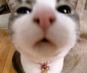kitten, cat, and kitty image