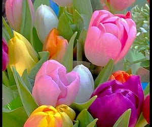 flowers, good morning, and tulips image