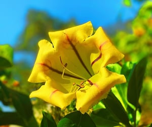 beauty, nature, and flower power image