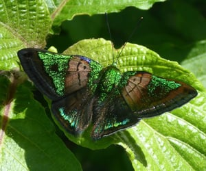 butterfly, green, and nature image