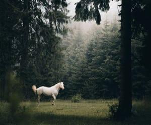 amazing, horse, and horses image