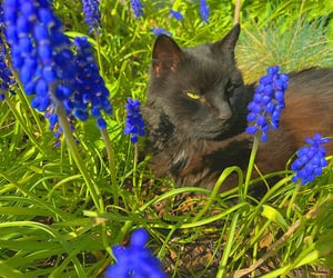 aesthetic, animals, and blue image