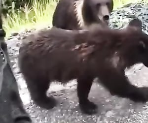 bears, epic, and funny image